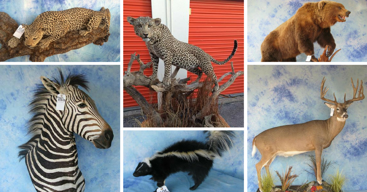 Guide to Selling Taxidermy | Estate Sale Company Blog