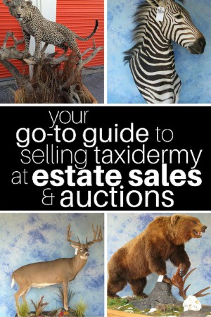 Guide to Selling Taxidermy at Estate Sales and Auctions