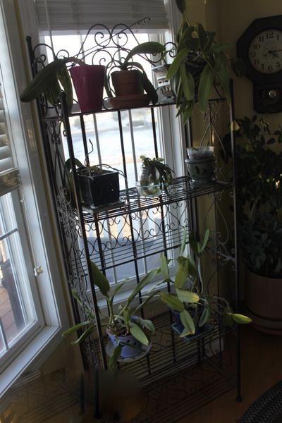 backlit plant stand
